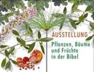 Bild von Pflanzen, Bäume und Früchte der Bibel