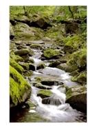 """Bild von Glückwunschkarte """"Flusslauf"""""""