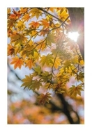 """Bild von Glückwunschkarte """"Herbst"""""""